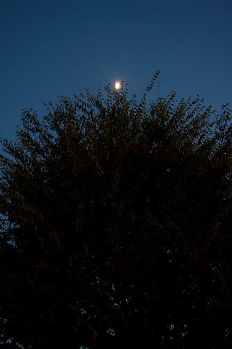 月光ツリー