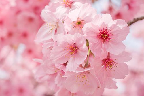 桜色に染まる新しい季節