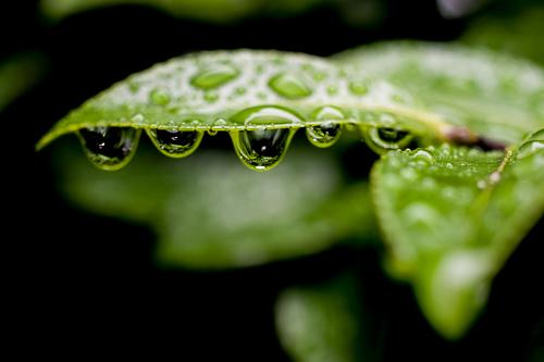 滴の雨宿り