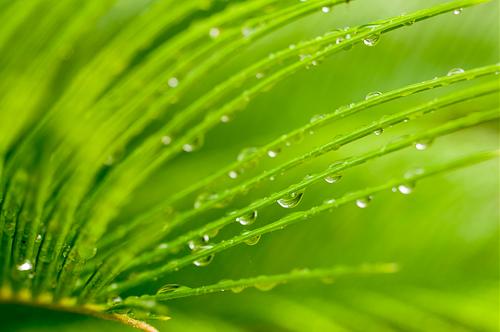 梅雨の合間