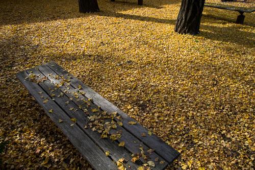 黄色い閑静