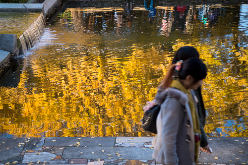 銀杏色の水面