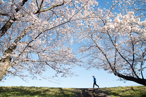 桜 風まかせネット