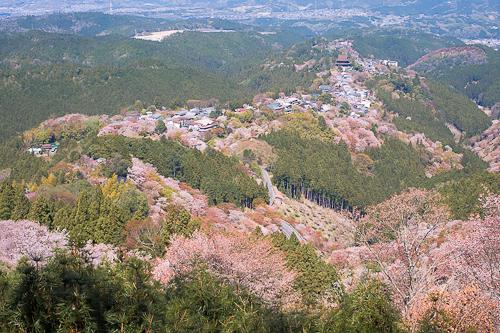 奈良 吉野山 山桜 風まかせネット